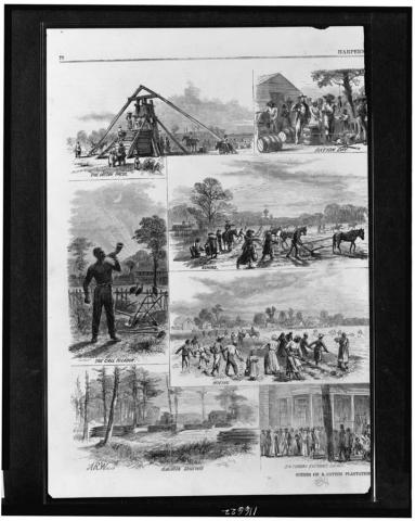 Slavery - Cotton Plantation Life American History African American History Civil Rights Slaves and Slave Owners Social Studies Visual Arts Tragedies and Triumphs