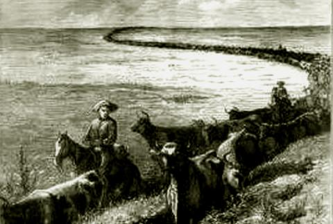 AMERICAN COWBOYS and CATTLE DRIVES (Illustration) American History Nineteenth Century Life Social Studies Legends and Legendary People