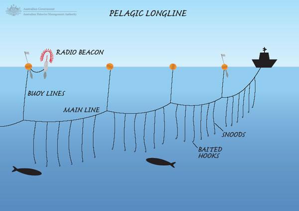Long liner fish hooks for B liner fish