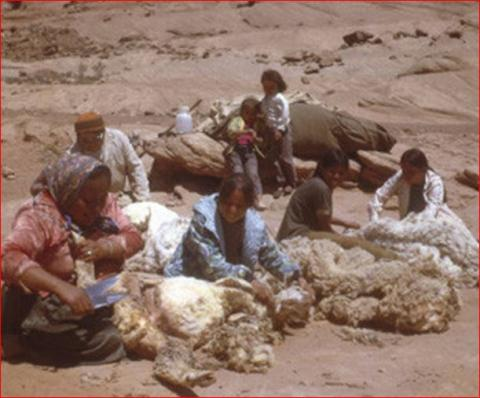 Navajo People Shearing Sheep Native-Americans and First Peoples  Visual Arts