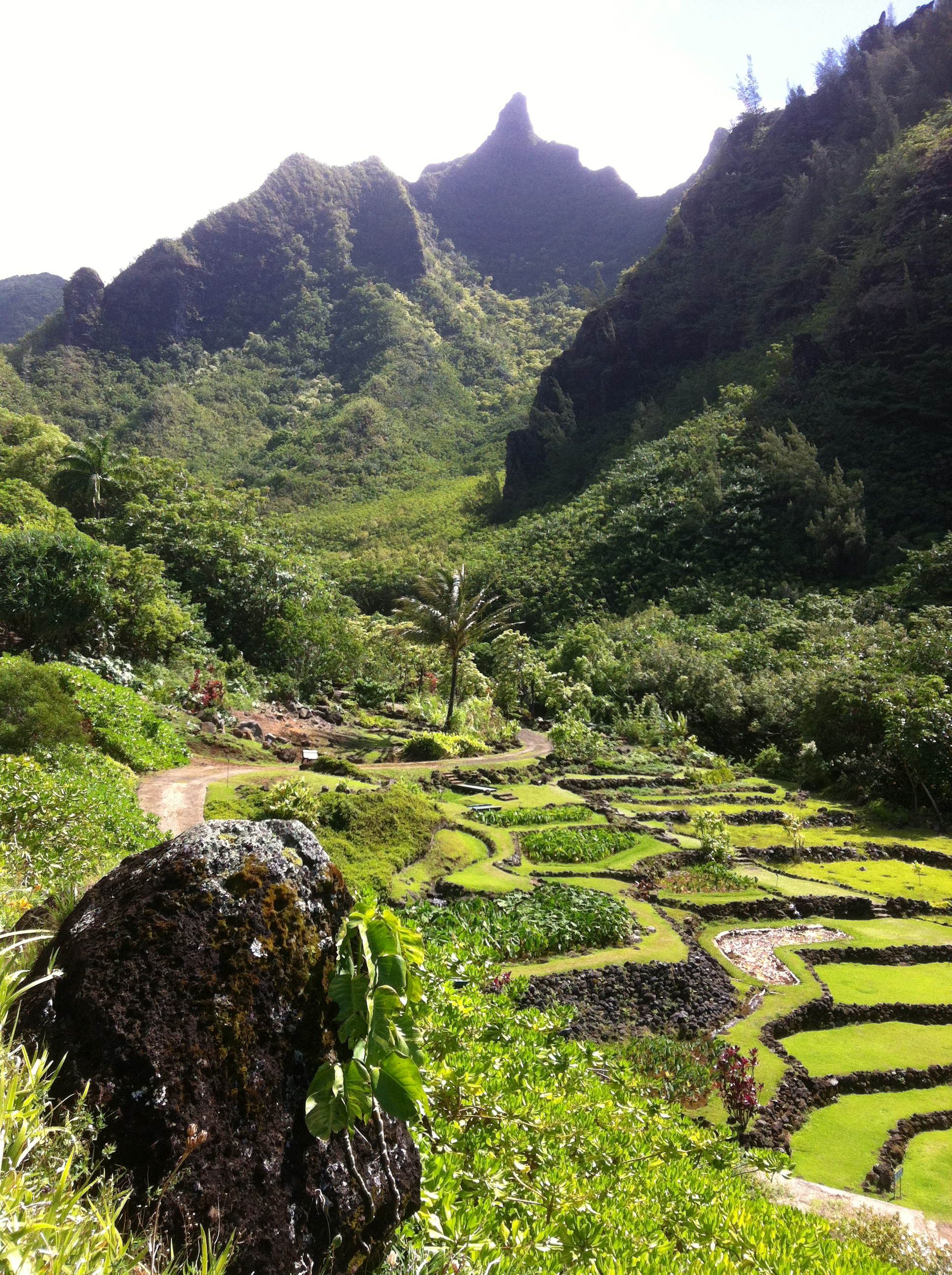 Limahuli tropical botanical garden kaua 39 i - National tropical botanical garden ...