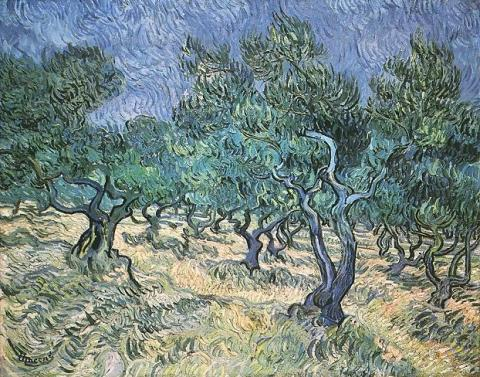 Olive Grove - Vincent's June, 1889 Painting Biographies Tragedies and Triumphs Visual Arts Nineteenth Century Life Famous People