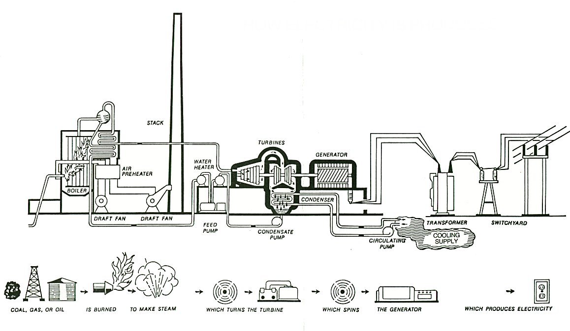 diagram of coal burning plant Plant and Animal Cell Diagrams Plant Diagrams for Elementary
