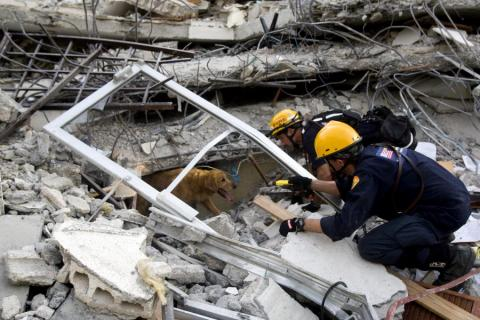 Canine Rescue Efforts in Port-au-Prince Disasters Famous Historical Events Geography Social Studies World History
