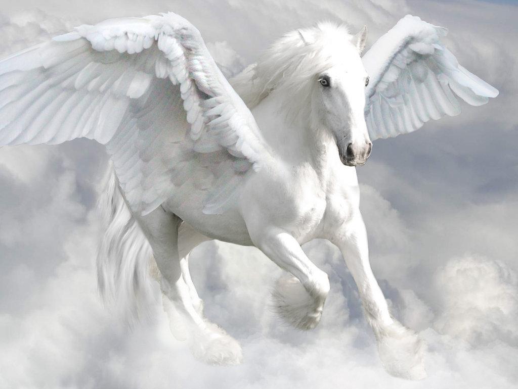 equivalent to Pegasus   Pegasus