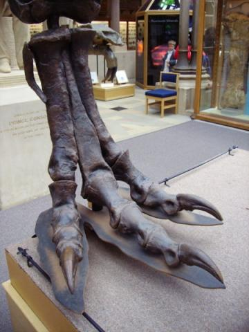 T. rex Right Hind Foot