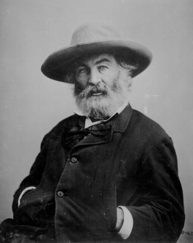 Walt Whitman - Photo Portrait American History Famous People Social Studies Tragedies and Triumphs Visual Arts Poetry
