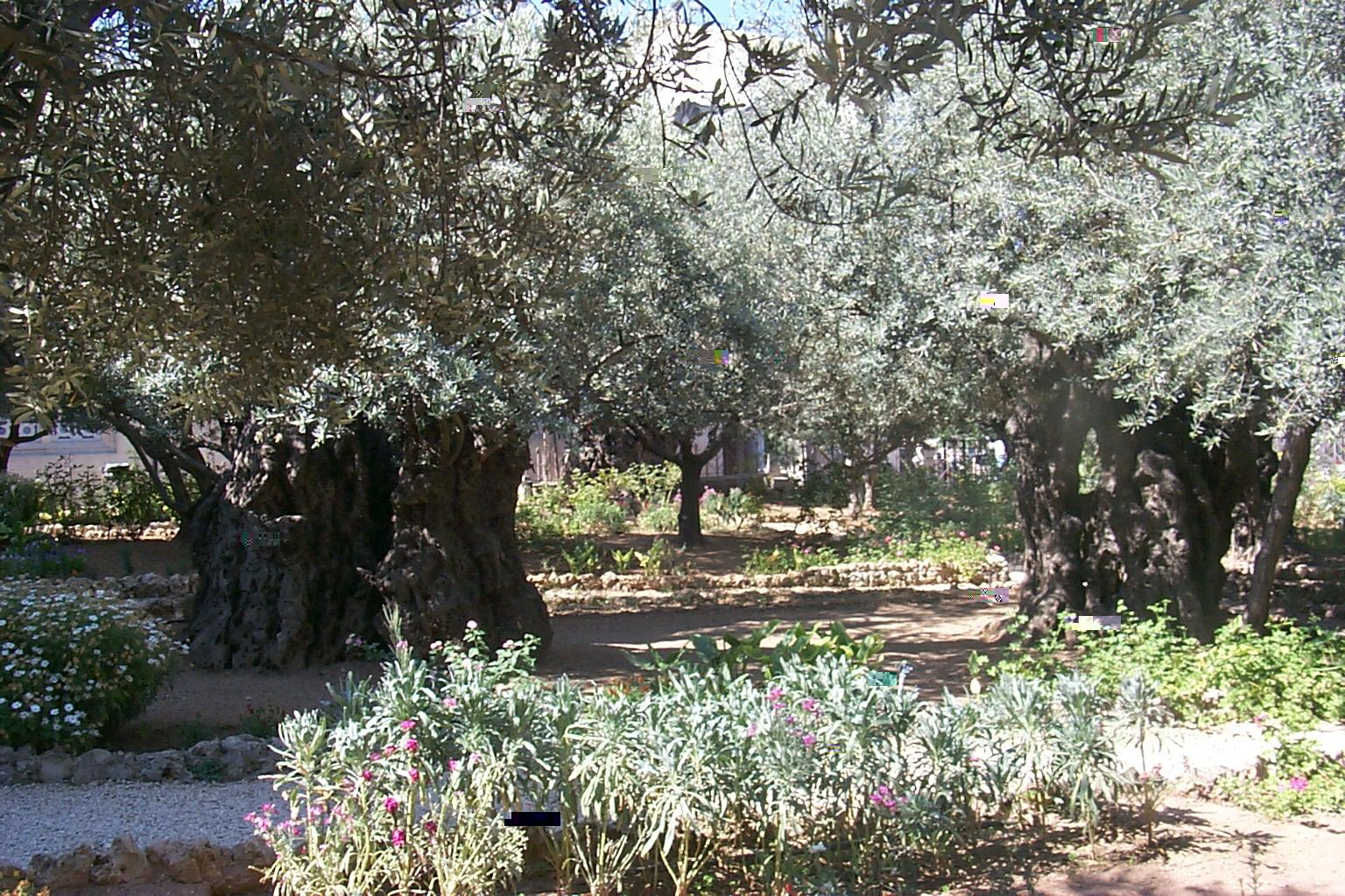 Garden Of Gethsemane Disasters Ancient Places And/or Civilizations Visual  Arts