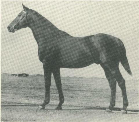 Hard Tack was the Sire of Seabiscuit