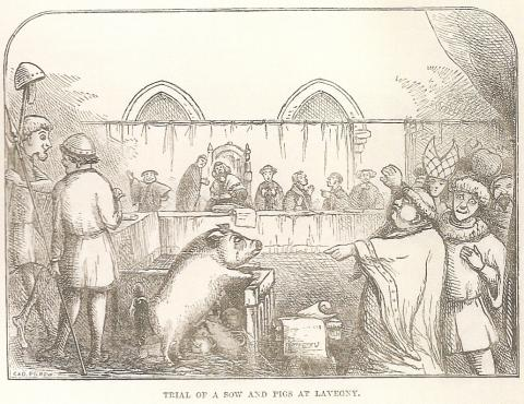 ANIMALS as DEFENDANTS - PIGS (Illustration) Medieval Times Social Studies World History Geography Trials