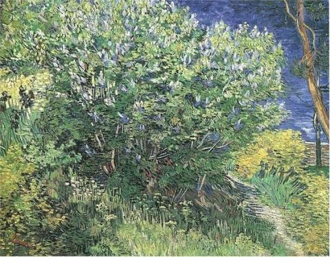Lilacs - Vincent's May, 1889 Painting Biographies Social Studies Tragedies and Triumphs Visual Arts