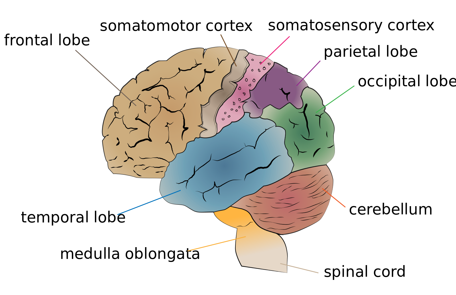 embarrassed teenagers use their brain different Start studying life span chapter 15  with piaget that adolescent thought can be qualitatively different  both use the same neural pathways in the brain,.