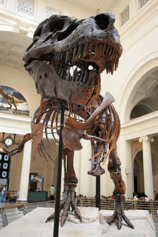T. rex Sue - Skeleton on Display Social Studies STEM Visual Arts Ancient Places and/or Civilizations