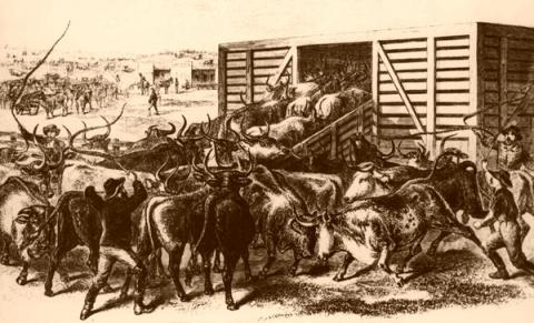 U.S. COW TOWNS and CATTLE TRAILS (Illustration) American History Nineteenth Century Life Legends and Legendary People