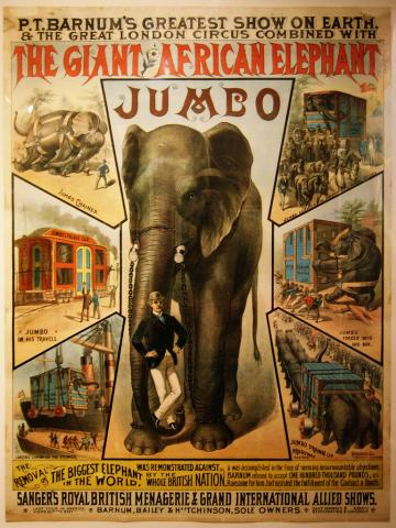Jumbo the Circus Elephant and His Tragic Death Famous Historical Events World History Disasters Famous People Social Studies Tragedies and Triumphs