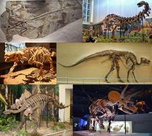 Dinosaur Montage - Fossilized Remains