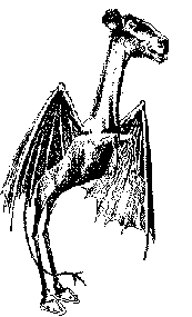 The Jersey Devil   (Illustration) Where in the World? by Students 0 Student Stories