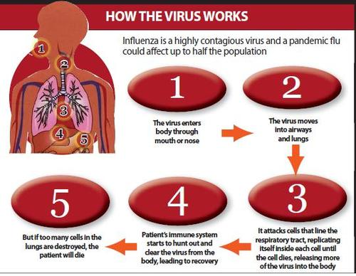 Spanish Flu Pandemic - SWINE FLU (Influenza A H1N1) OUTBREAK of 2009