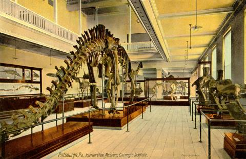 Diplodocus - Dinosaur Found in 1899 Geography Social Studies STEM Visual Arts World History