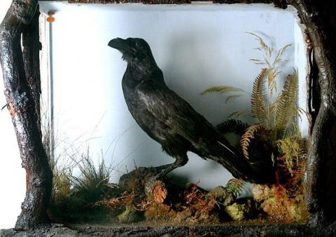 Grip - The Real Talking Raven Poetry American History Social Studies Visual Arts Nineteenth Century Life