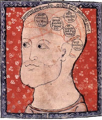 Diagram of the Brain - 1300 Medieval Times Social Studies World History Visual Arts