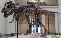Sue: Most-Complete T. Rex Fossil