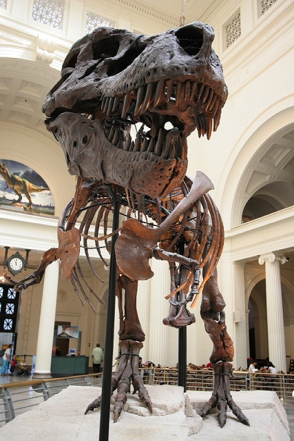 T. rex Sue - Skeleton on Display