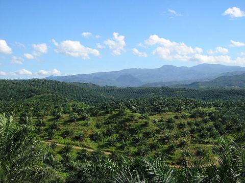 Indonesian Palm Oil Plantation World History Geography Ethics STEM