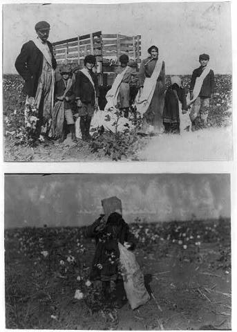 Family Picking Cotton  Visual Arts American History Social Studies