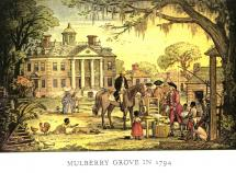 Mulberry Grove Plantation and the Cotton Gin