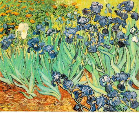 Irises - Vincent's May, 1889 Painting Tragedies and Triumphs Visual Arts Nineteenth Century Life Famous People