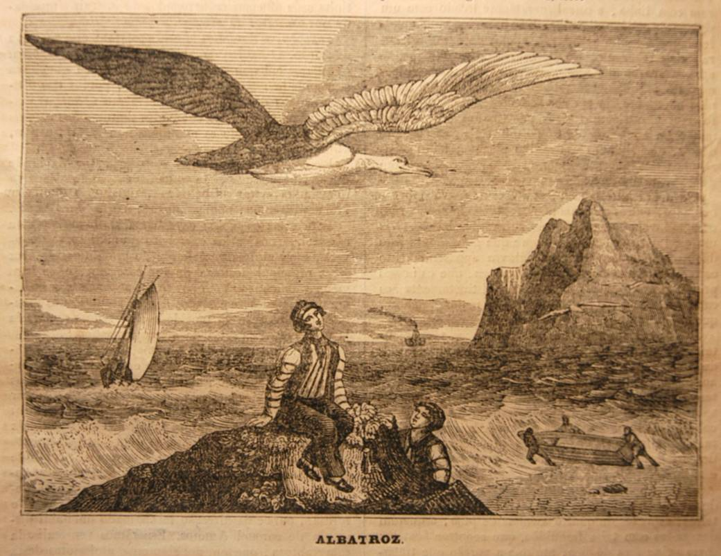 Albatross At Sea Rime Of The Ancient Mariner