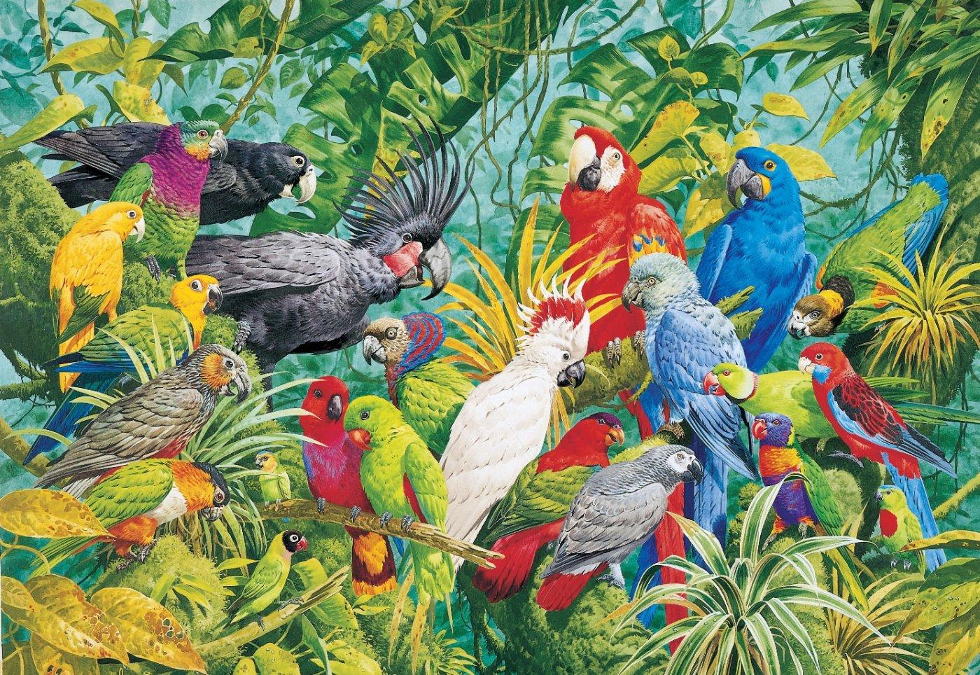 colorful birds of a rainforest. Black Bedroom Furniture Sets. Home Design Ideas